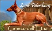 Редкая порода собак. Чирнеко дель Этна. Информация, фото, щенки.